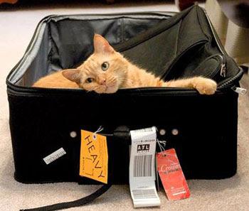 travelcat